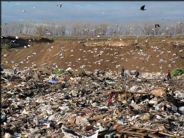 """""""Чистый город"""" предлагает 13,5 миллионов за вывоз мусора из Ворошиловского района"""