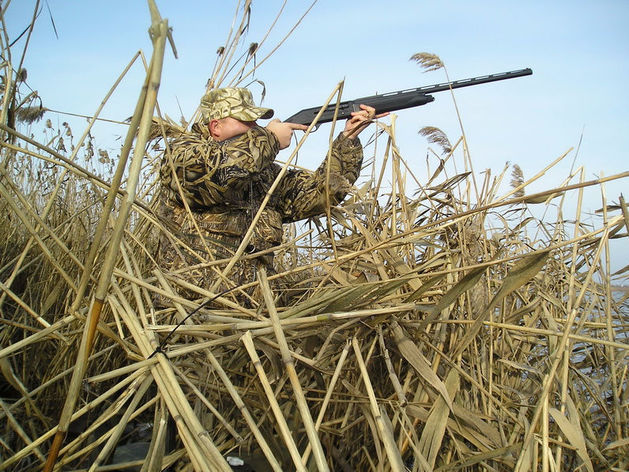 Более 13 тысяч животных выпустили в охотугодья Ростовской области в 2015 году
